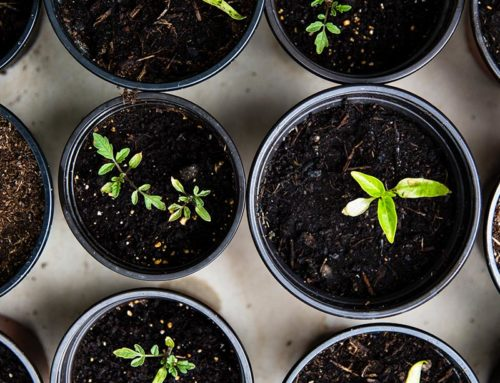 Quality compost is key to growing good crops