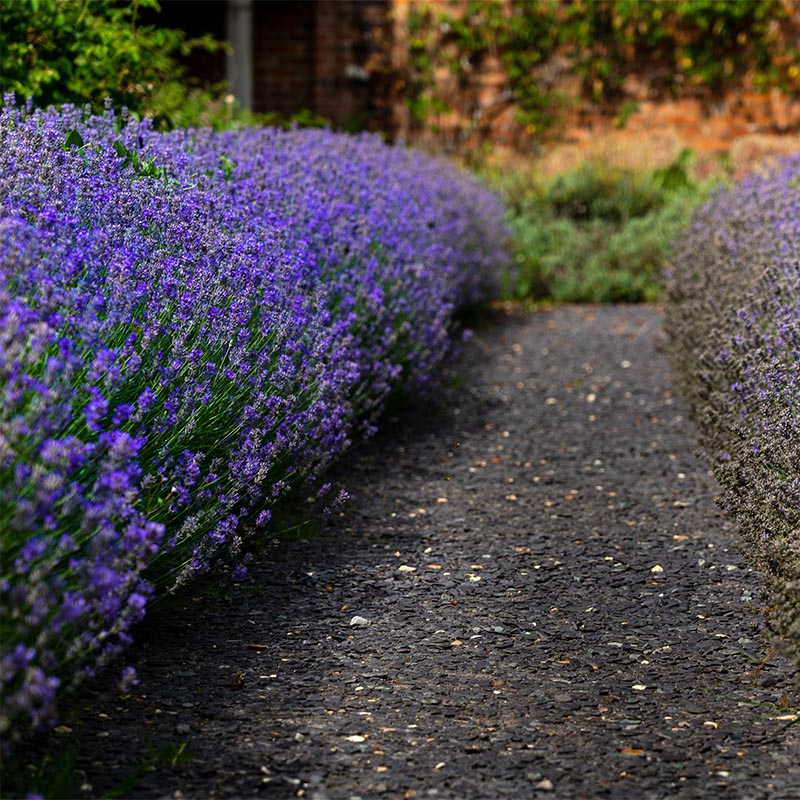 tara hill flowers shelter belt